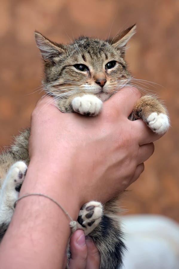 Gestreift mit weißer junger Katze lizenzfreies stockbild