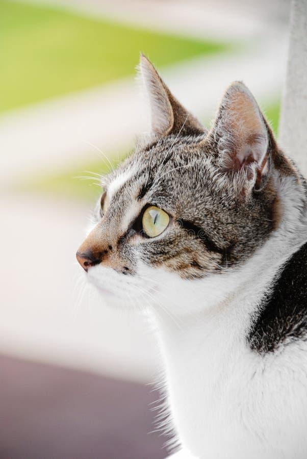 Gestreifte Cat Headshot Detail stockbild