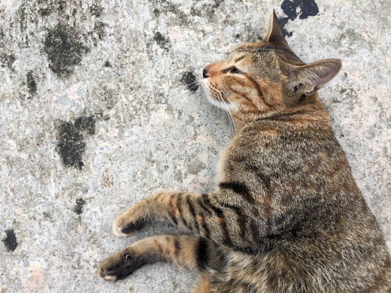 Gestreifte Katze, die sich hinlegen und Lüge auf Seite aus den konkreten Grund stockbilder