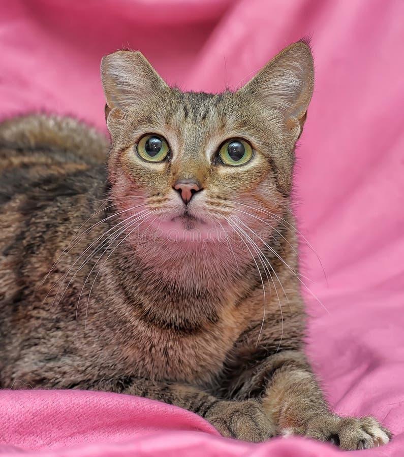 gestreifte Katze mit einem befestigten Ohr lizenzfreies stockbild