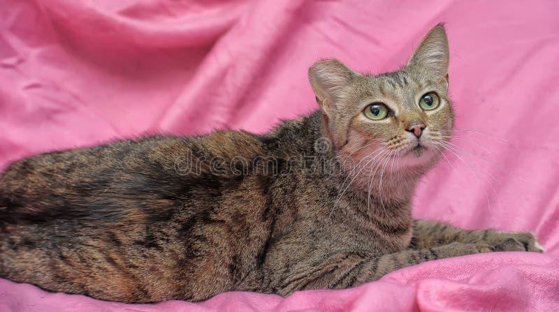 gestreifte Katze mit einem befestigten Ohr lizenzfreies stockfoto