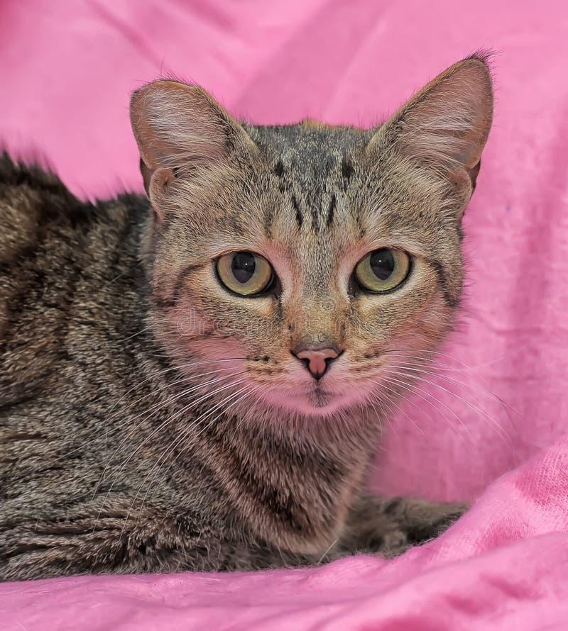 gestreifte Katze mit einem befestigten Ohr stockbild