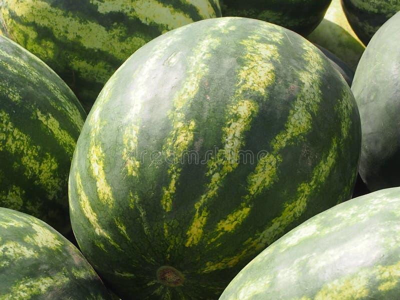 Gestreifte Wassermelonen stockfotos