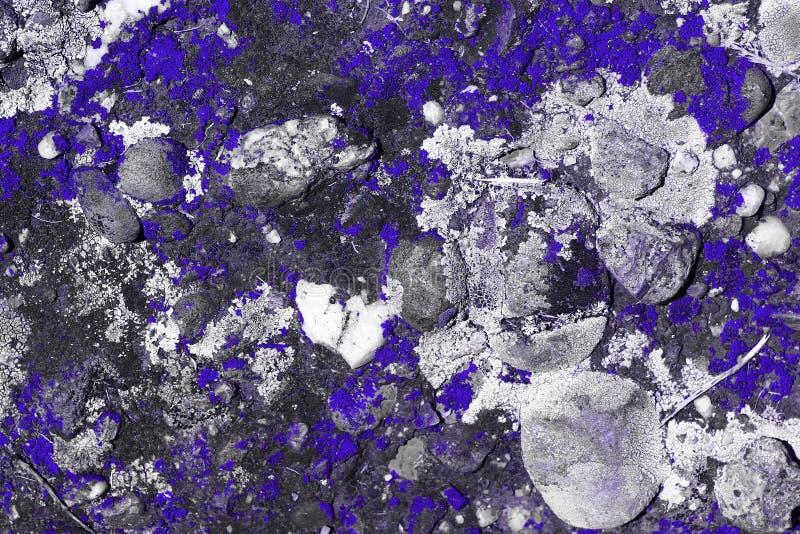 Gestreifter Pilz des wunderbaren purpurroten Schmutzes auf Wandbeschaffenheit - abstrakter Fotohintergrund lizenzfreie stockbilder
