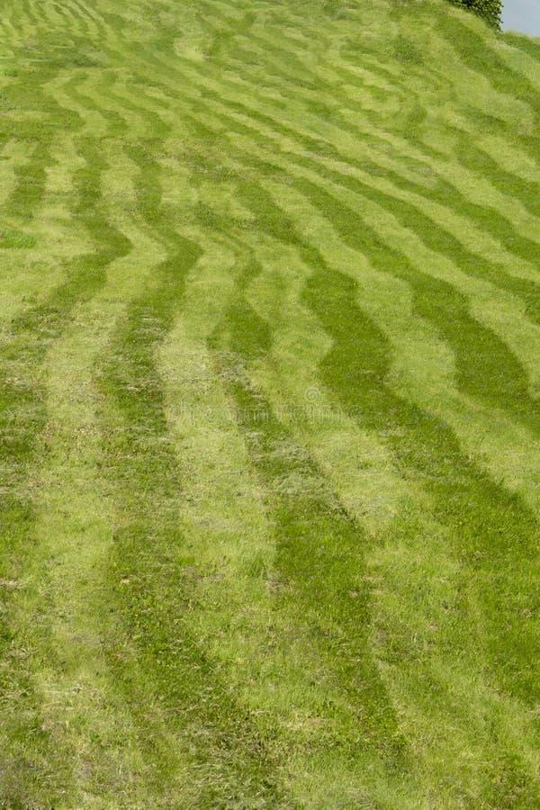 Gestreiftes Feld, Gras gemäht durch ungleiche Streifen von verschiedenen grünen Abstufungen Gebogene Streifen von gemähter Rasenf stockfotos
