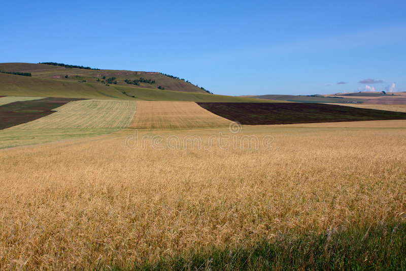Gestreiftes landwirtschaftliches Feld lizenzfreies stockbild