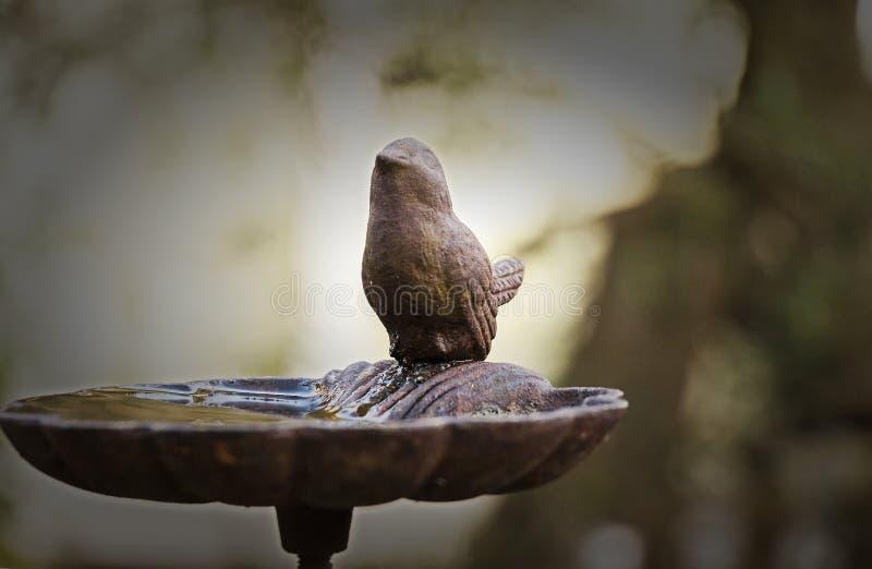 Gestreken statusvogel stock afbeelding