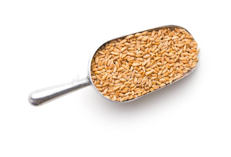 Gesunde buchstabierte Körner lizenzfreies stockbild