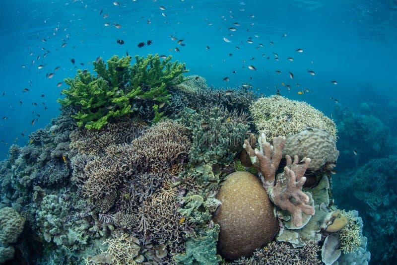 Gesunde Coral Reef 1 lizenzfreies stockbild