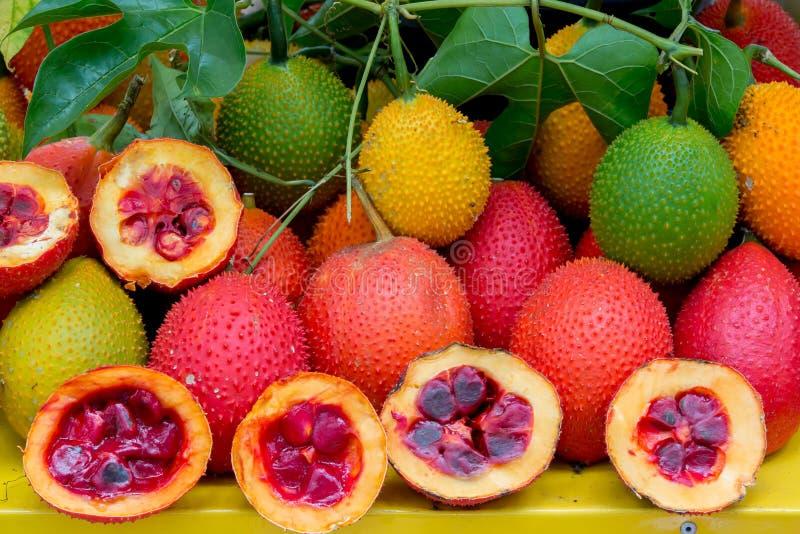 Gesunde Frucht Gac-Frucht lizenzfreie stockbilder
