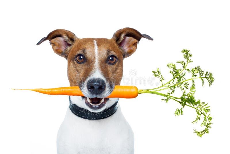 Gesunder Hund mit einer Karotte stockbilder