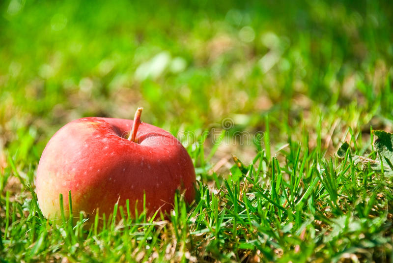 Download Gesunder roter Apfel stockbild. Bild von glänzend, frisch - 26362041