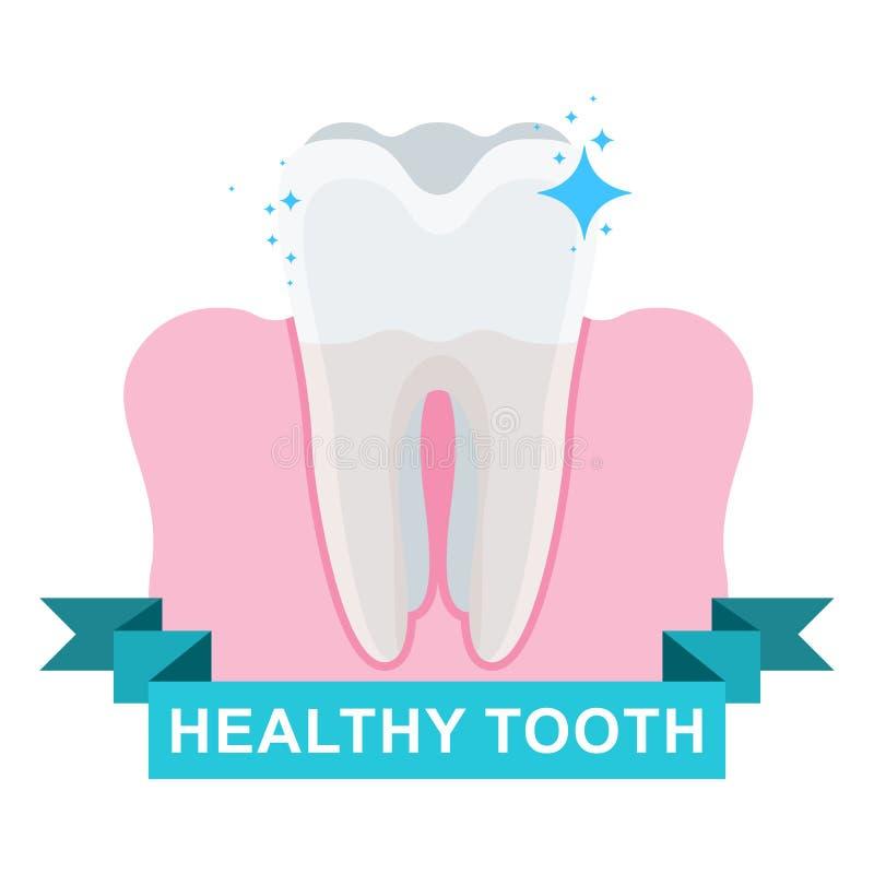 Gesunder Zahn und Gummi lizenzfreie abbildung