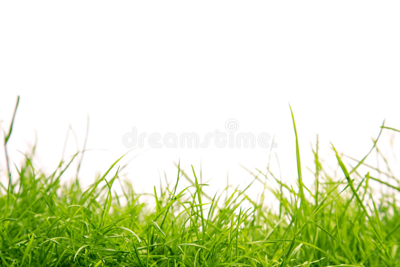 Gesundes Gras lizenzfreies stockfoto