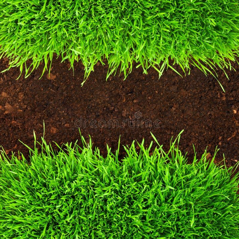 Gesundes Gras im Boden lizenzfreie stockfotos