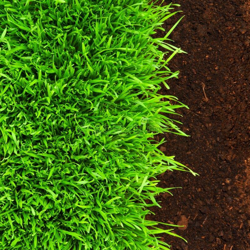 Gesundes Gras im Boden stockfotografie