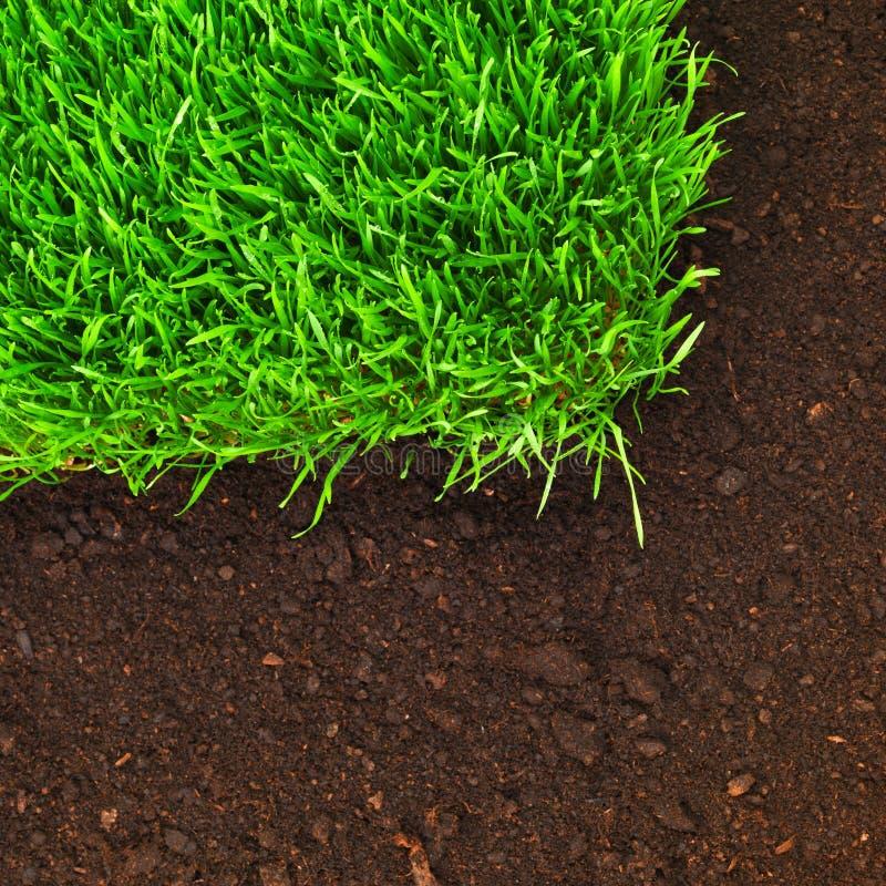 Gesundes Gras und Boden stockfoto