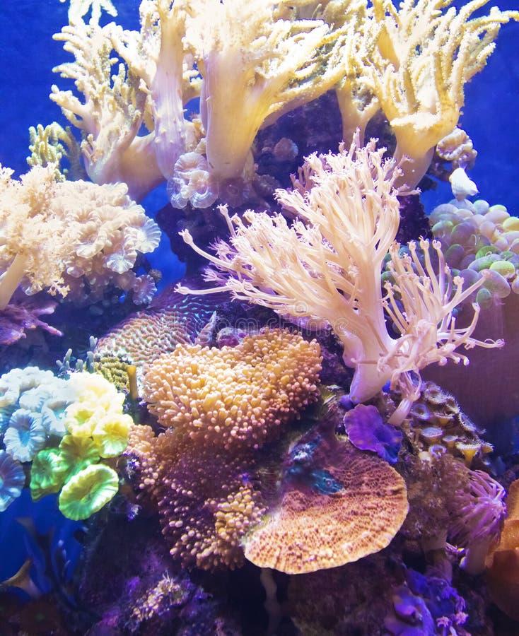 Gesundes und vibrierendes Korallenriff stockbild