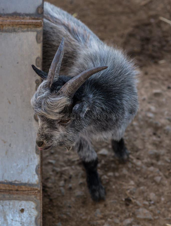 Get i en zoo fotografering för bildbyråer