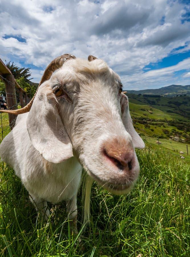 Get i nyazeeländskt landskap arkivfoto