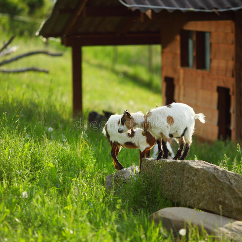 Get på grönt gräs arkivbilder