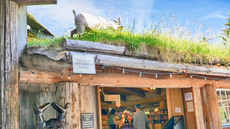 Get som betar på taket av gräs i Coombs Nanaimo Kanada arkivfoto