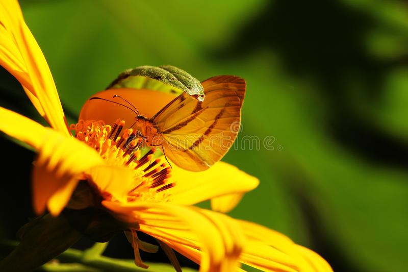 Getarnter Schmetterling stockfoto