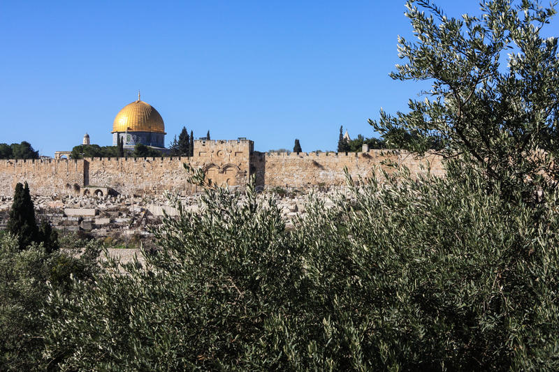 Download Gethsemane Olive Trees And The Walls Of Jerusalem Stock Photo - Image: 36490298