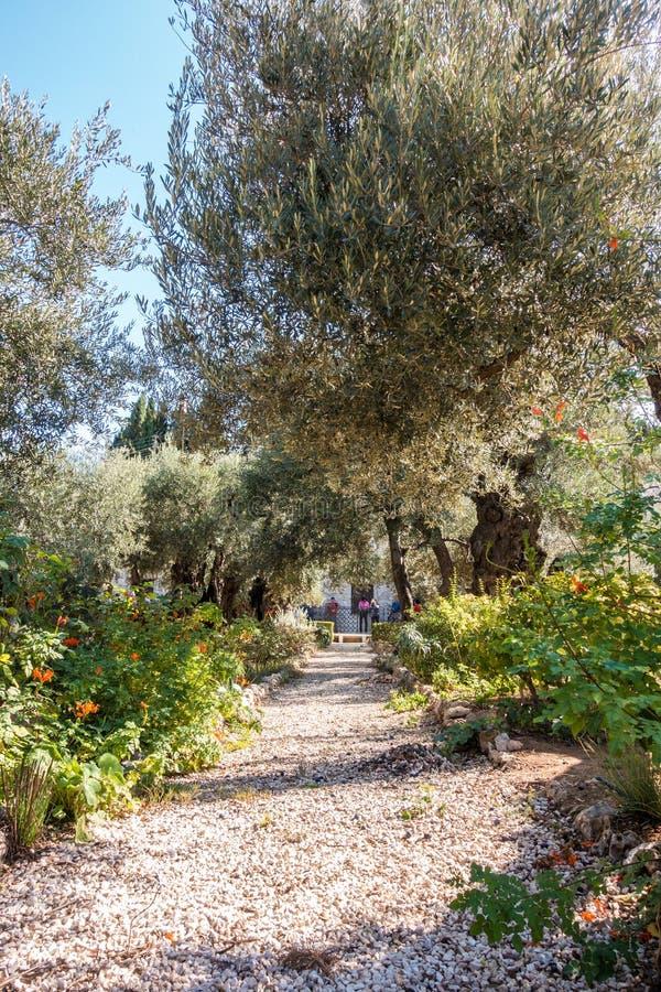 Gethsemane trädgård på Mount of Olives royaltyfri fotografi