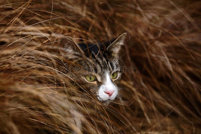 Getigerte Katze und Weiß Cat Hiding im langen Gras lizenzfreies stockfoto
