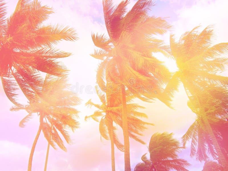 Getonter Palmenhintergrund Rosa und violette Töne stockfotografie