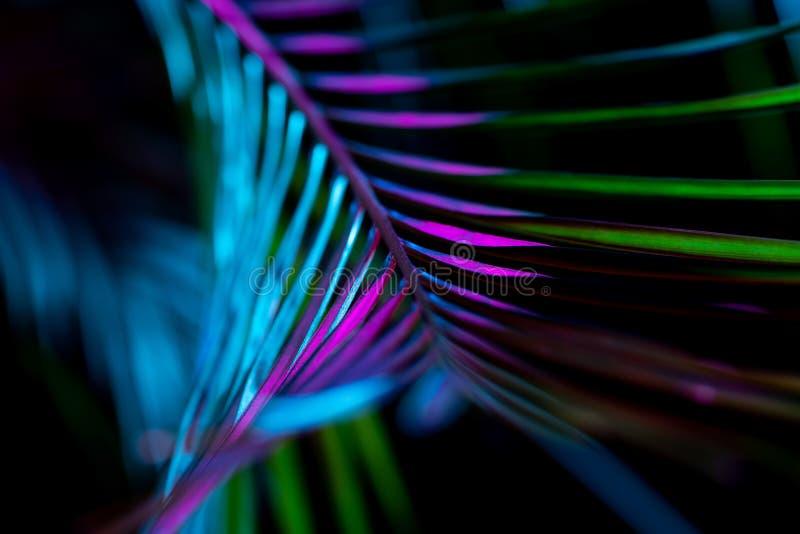 getontes Bild des frischen Palmblattes, stockfotos