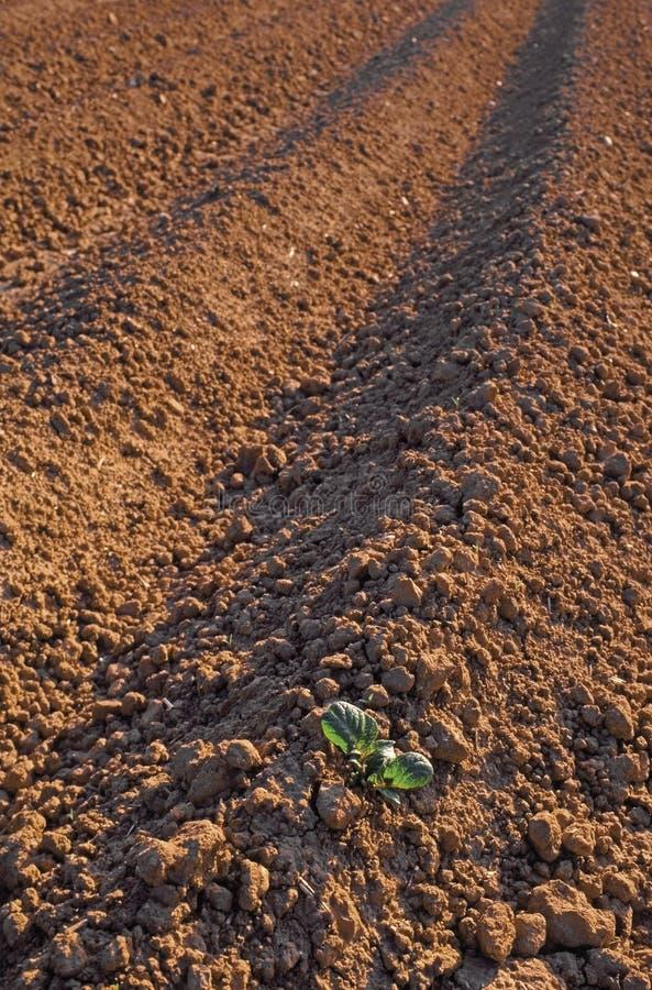 Getreide lizenzfreies stockbild