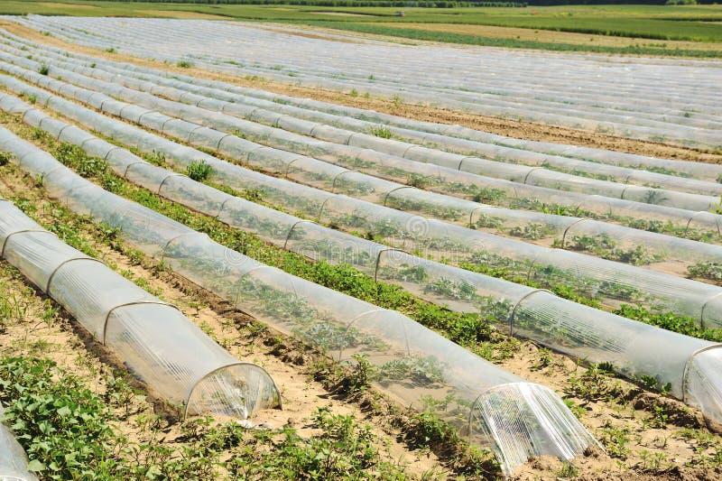 Getreide auf Ackerland lizenzfreies stockbild