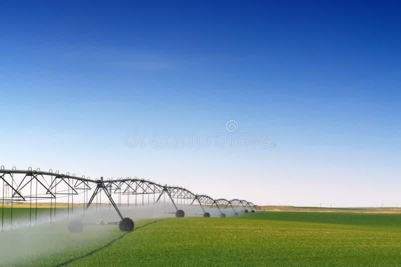Getreide-Bewässerung lizenzfreie stockfotos
