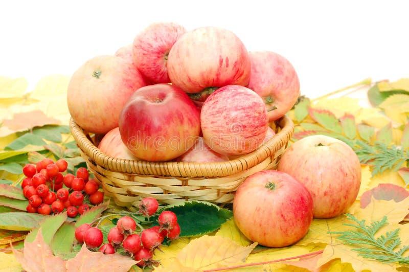 Getreide der Äpfel stockbild