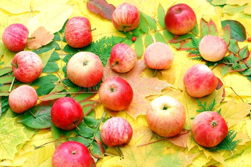 Getreide der Äpfel stockbilder