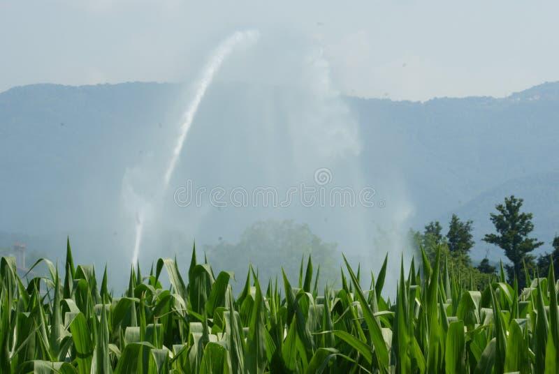 Getreide und Wasser stockfotos
