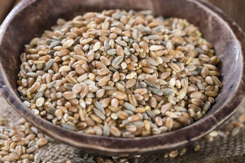 Getreide (Weizen, Roggen, Gerste, Hafer und Hirse) lizenzfreies stockfoto