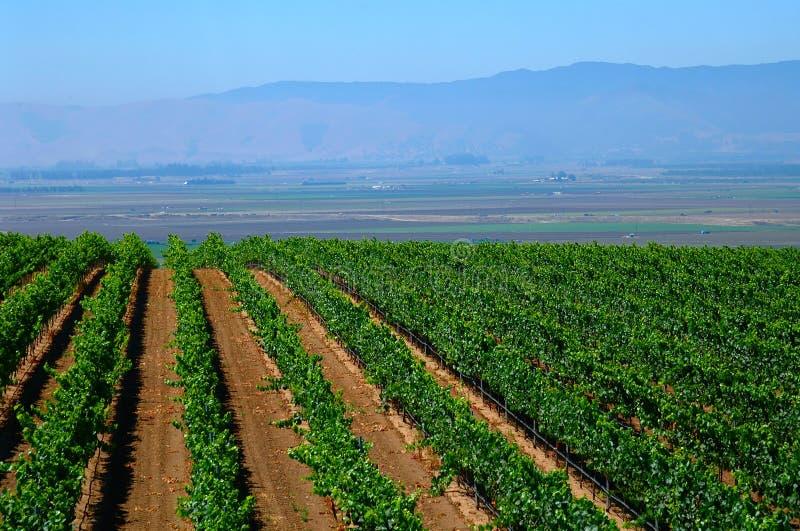 Getreideanbau in Kalifornien lizenzfreie stockfotografie