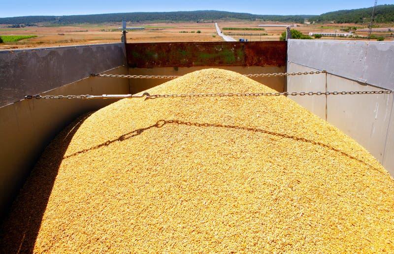 Getreideernte-Weizendamm im LKW stockbild