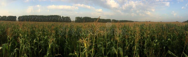 Getreidefeld an einem bewölkten Sommertag Panorama Ural, Russland lizenzfreie stockfotografie