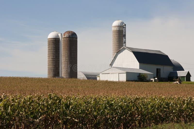 Getreidefeld mit einem Stall und Silos stockfotografie