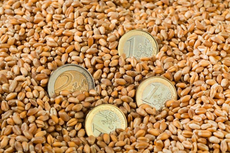 Getreidekörner des Weizens stockfotos