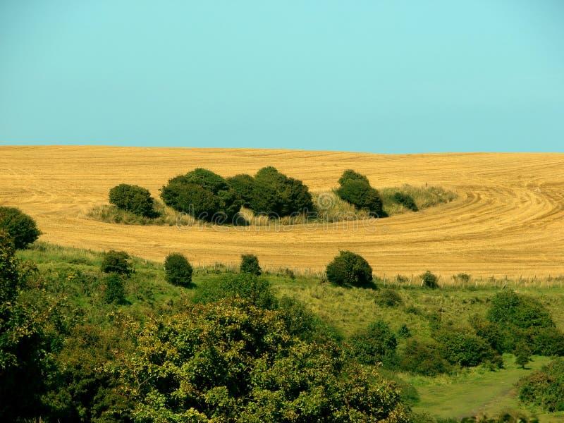 Getreidekreise stockbild