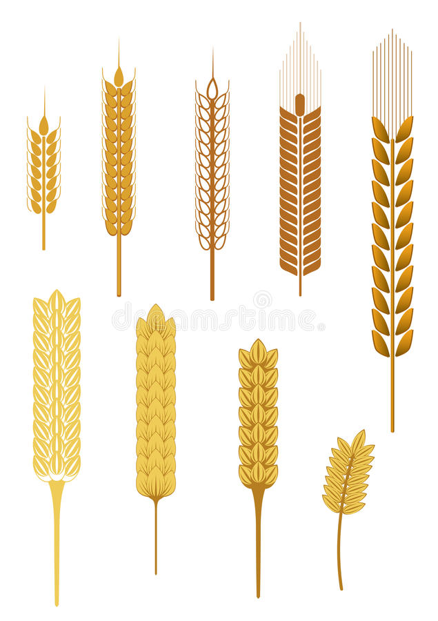 Download Getreideohren vektor abbildung. Illustration von aufwendig - 12201348