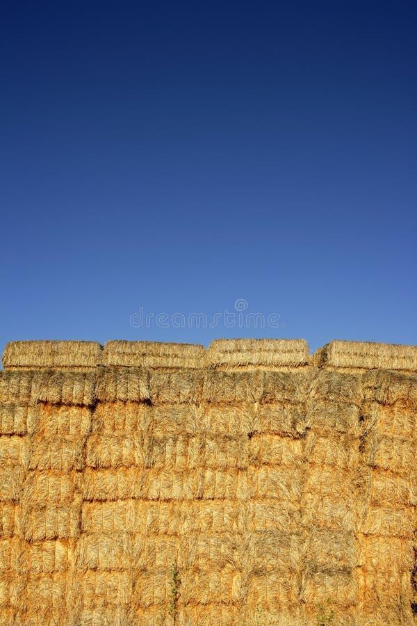 Getreidestall mit quadratischem Formstapel auf Spalten lizenzfreie stockfotografie