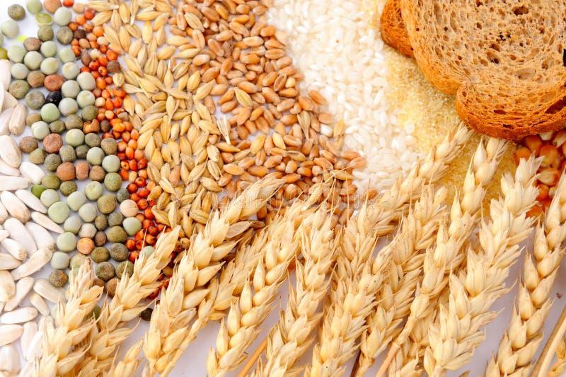 Getreidestartwerte für zufallsgenerator und Weizenohren lizenzfreies stockfoto