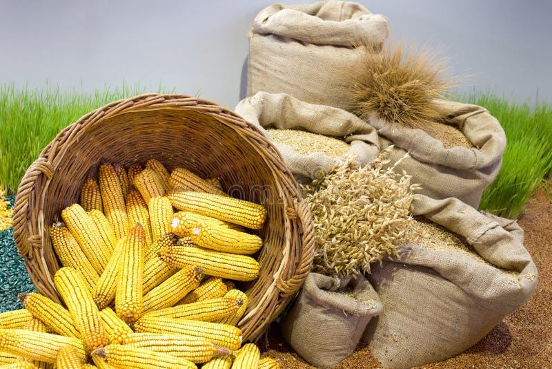 Getreidezusammenstellung lizenzfreie stockbilder