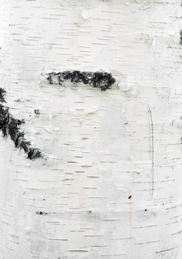 Getrennt auf Weiß stockfotografie